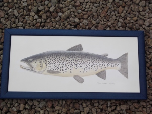 Beautiful trout picture by Paul Hogan