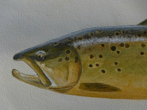 Mataura trout 30 August 003