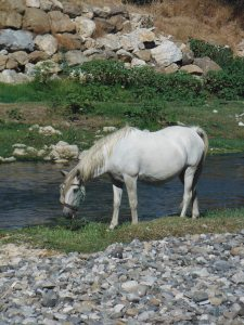 A horse chilling on the bank of the river