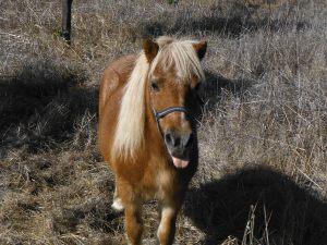 Juan´s pony