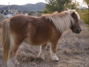 Tony the pony.