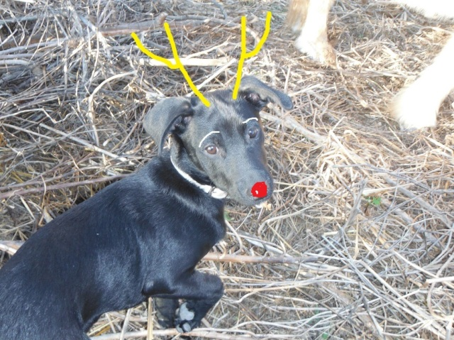 Boris, the little reindeer
