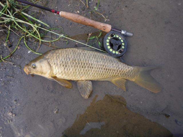 A nice carp