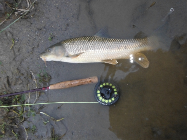 The other barbel