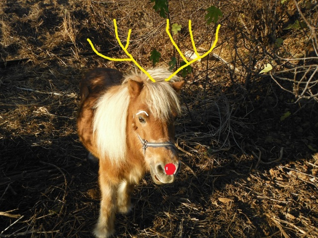 Tony the reindeer