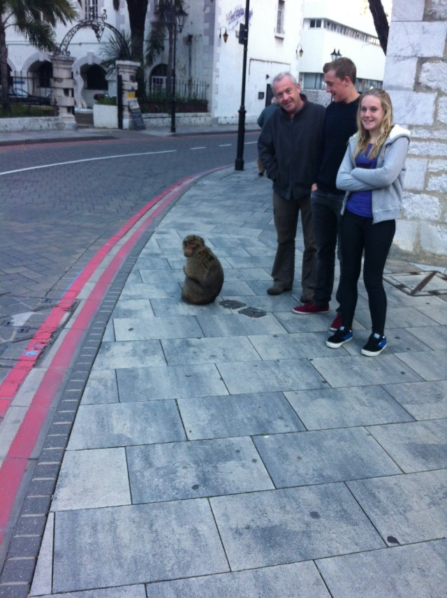 Four apes chilling in Gibraltar