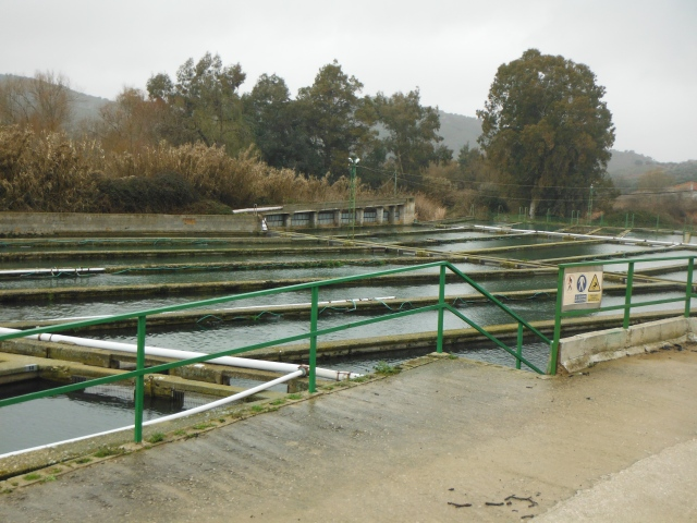 Last year the fish farm here produced around 4000 kg of caviar - worth a few bob!