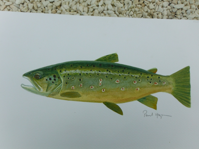 "One of the lovely trout from the ""Mountain Lough"" in Leitrim."