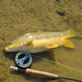 Here´s another barbel