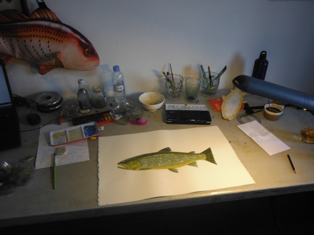 The water colour version of Mark´s trout takes shape.