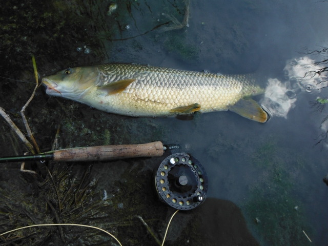 I think this was the best of the barbel. It is a while since I had a bigger one!