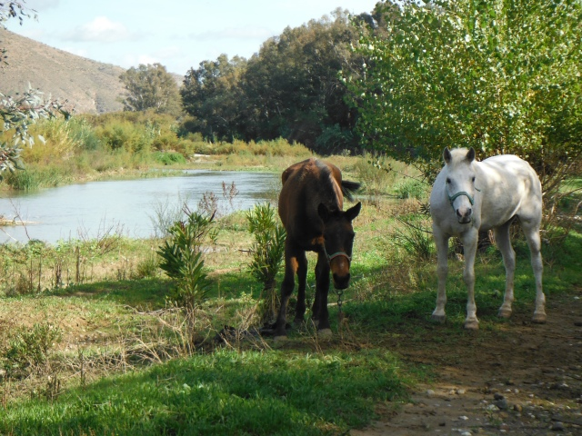 Another afternoon on the river. Here are a couple of horses chilling.