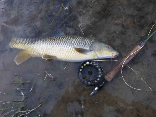 The little pink nymph and the first fish of the year