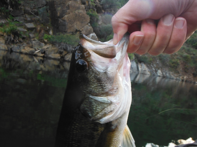 This was the second of two black bass. The first was a similar size.