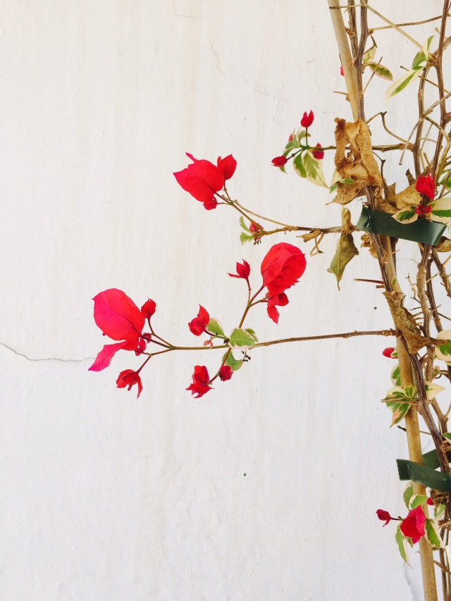This was the judge´s favourite and mine. Pippa´s picture of flowers just outside the house 9/10