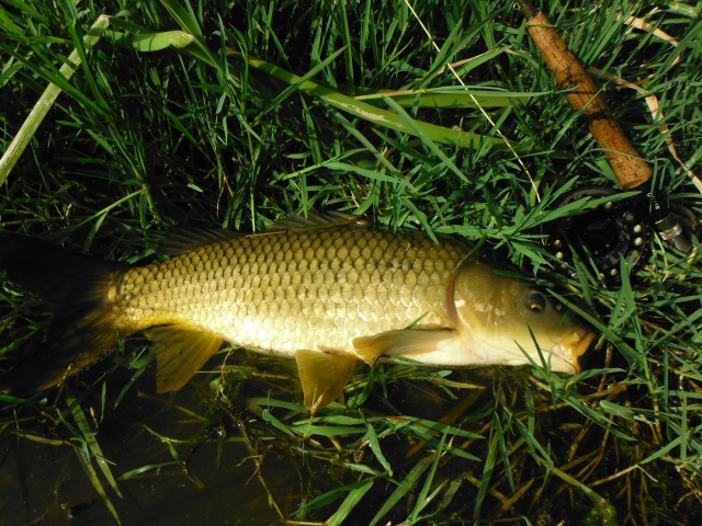 The first carp of the year.
