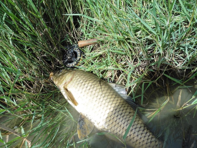 After manhandling the fish grounded in the rushes I had a chance to lay it down and have a better look at it.