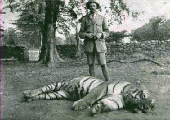 Jim Corbett and the Tigress of Champarat. This tigress had killed 436 people over several years in Nepal and India. When Corbett examined the carcass he discovered that the canine two of the canine teeth had been badly damaged in a previous shooting and it is likely that this resulted in the animal switching to humans instead of her natural prey. Corbett found that other man-eaters had suffered injuries which compromised their ability to hunt.
