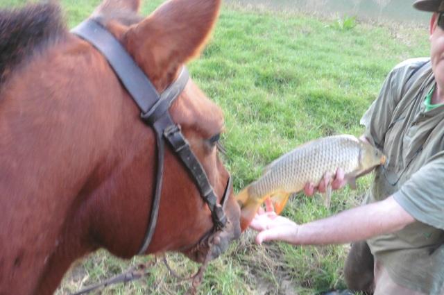 A horse admires the fish.